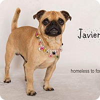 Adopt A Pet :: Javier - Sherman Oaks, CA