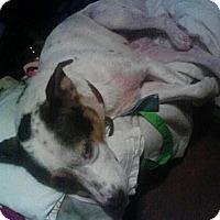Adopt A Pet :: Skyler - Crosby, TX