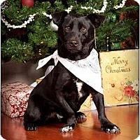 Adopt A Pet :: Cosmo - Owensboro, KY
