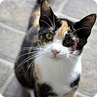 Adopt A Pet :: Destiny - Xenia, OH
