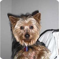 Adopt A Pet :: Yogi - Rescue, CA