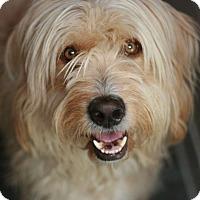 Adopt A Pet :: Buck - Canoga Park, CA