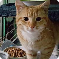 Adopt A Pet :: Frito - Pasadena, CA