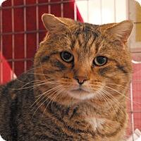 Adopt A Pet :: Milo - Winchendon, MA