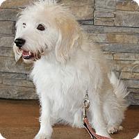 Adopt A Pet :: Cooper ADOPTION PENDING - Waldorf, MD