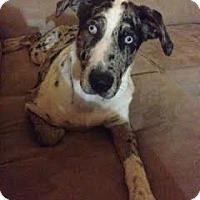 Adopt A Pet :: Gracie Mae - Sheridan, IL