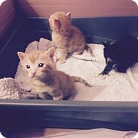 Adopt A Pet :: Litter 6 - Daleville, AL