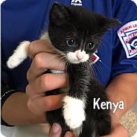 Adopt A Pet :: Kenya - Herndon, VA