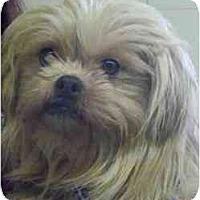 Adopt A Pet :: Kara - Seattle, WA