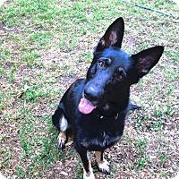 Adopt A Pet :: Prince - Green Cove Springs, FL