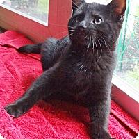 Adopt A Pet :: Serpico - N. Billerica, MA