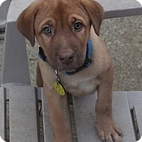 Adopt A Pet :: Ben - North Olmsted, OH
