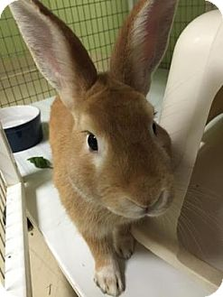 Other/Unknown Mix for adoption in Oak Park, Illinois - Buttercup