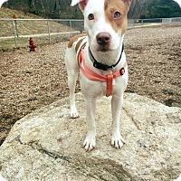 Adopt A Pet :: Cypress - New Milford, CT
