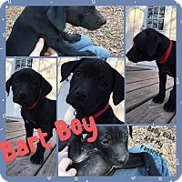 Adopt A Pet :: Bart Boy - Hearne, TX