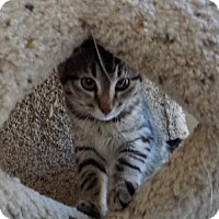 Adopt A Pet :: Mykah - Lenexa, KS