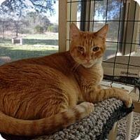 Adopt A Pet :: Duke - Killeen, TX