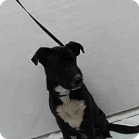 Adopt A Pet :: BOBBY - Orlando, FL