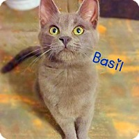 Adopt A Pet :: Basil - York, PA