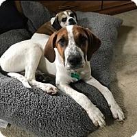 Adopt A Pet :: Lucy - Aurora, IL