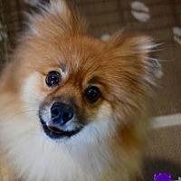 Adopt A Pet :: Noodles - Irvine, CA