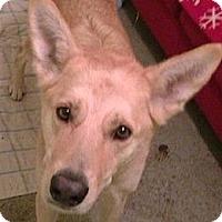 Adopt A Pet :: Parker - BC Wide, BC