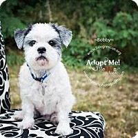 Adopt A Pet :: Bobby - Shawnee Mission, KS