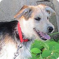 Adopt A Pet :: AGGIE - Humboldt, TN