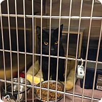 Adopt A Pet :: Licorice - Muncie, IN