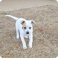 Adopt A Pet :: KC - Bedminster, NJ