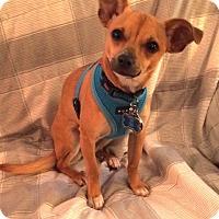 Adopt A Pet :: Lia - Mt. Prospect, IL