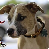 Adopt A Pet :: Widget - Alpharetta, GA