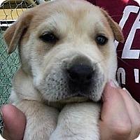 Adopt A Pet :: Charlie - Waller, TX