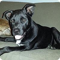 Adopt A Pet :: Houston - Orange Lake, FL