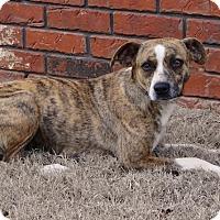 Adopt A Pet :: Suzie - Westport, CT