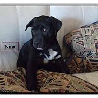 Adopt A Pet :: Nina - Colmar, PA