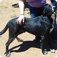 Adopt A Pet :: Mojo - Seattle, WA