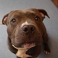 Adopt A Pet :: Produce - Bay Shore, NY