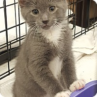 Adopt A Pet :: Elliott - Berkeley Hts, NJ