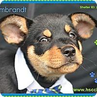 Adopt A Pet :: Rembrandt - Plano, TX