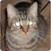 Adopt A Pet :: Greta - Clementon, NJ