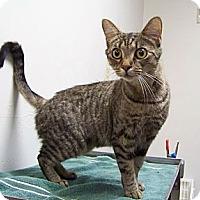 Adopt A Pet :: Mya - Dover, OH