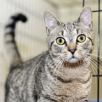 Adopt A Pet :: Snooper - Whitehall, PA