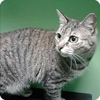 Adopt A Pet :: Trinket - Barnwell, SC