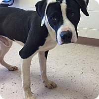 Adopt A Pet :: Lobster - McDonough, GA