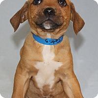 Adopt A Pet :: Tetris - Waldorf, MD