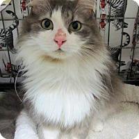 Adopt A Pet :: Carl - Lunenburg, MA