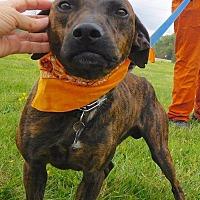 Adopt A Pet :: Boomer - St. Francisville, LA