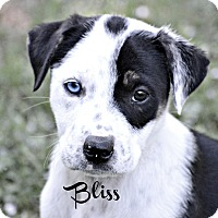 Adopt A Pet :: Bliss~adopted! - Glastonbury, CT