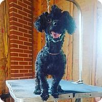 Adopt A Pet :: Nikki_Sixx_2017 - Virginia Beach, VA
